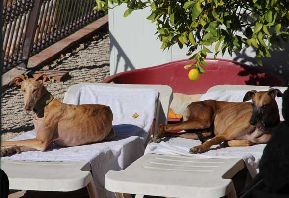 GALGO CHILL OUT