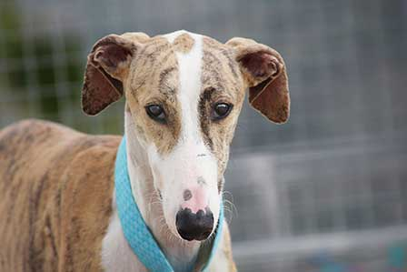 Galgofreedom - Businesses get involved
