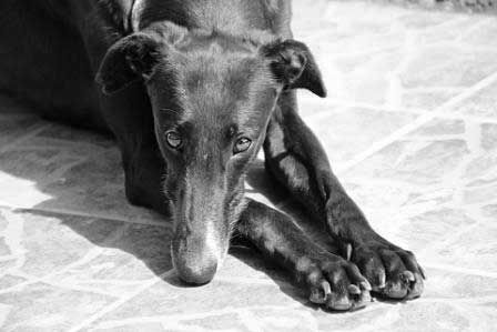 Galgofreedom - Your legacy can save lives