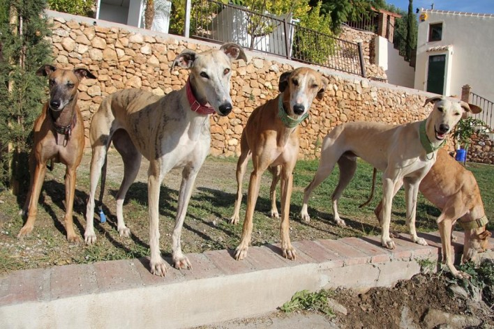 GALGO GROUP